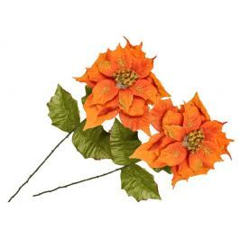 EverGreen Poinsettia velkokvětá 2 ks ohnivá