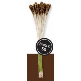 PME Pestíky – lilie hnědá 50 ks