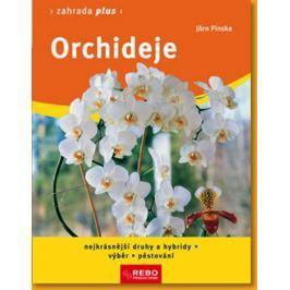 Pinske Jörn: Orchideje - Zahrada plus