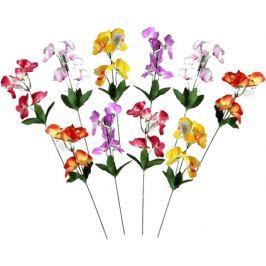 EverGreen Orchideje 10 ks