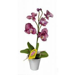 EverGreen Orchidea v květináči výška 35 cm, fialová